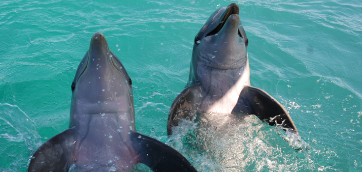 Blue Lagoon Swim with the Dolphins