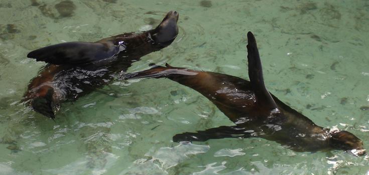 Nassau Bahamas Sea Lion Encounter