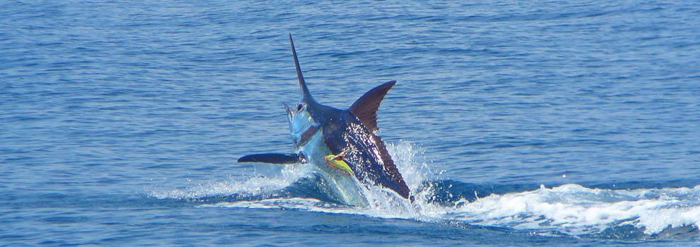 Cabo San Lucas Deep Sea Fishing Cabo Tour Center