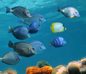 Key West Coral Reef Fish Species