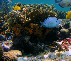 About the Coral Reef