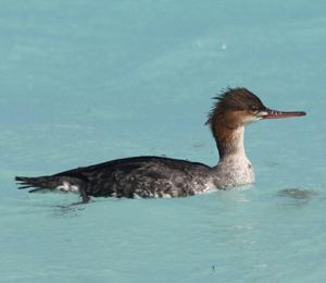 Birds That Visit Fort Jefferson in December