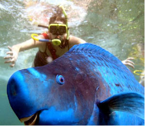 Parrotfish Photo Bomb in Key West