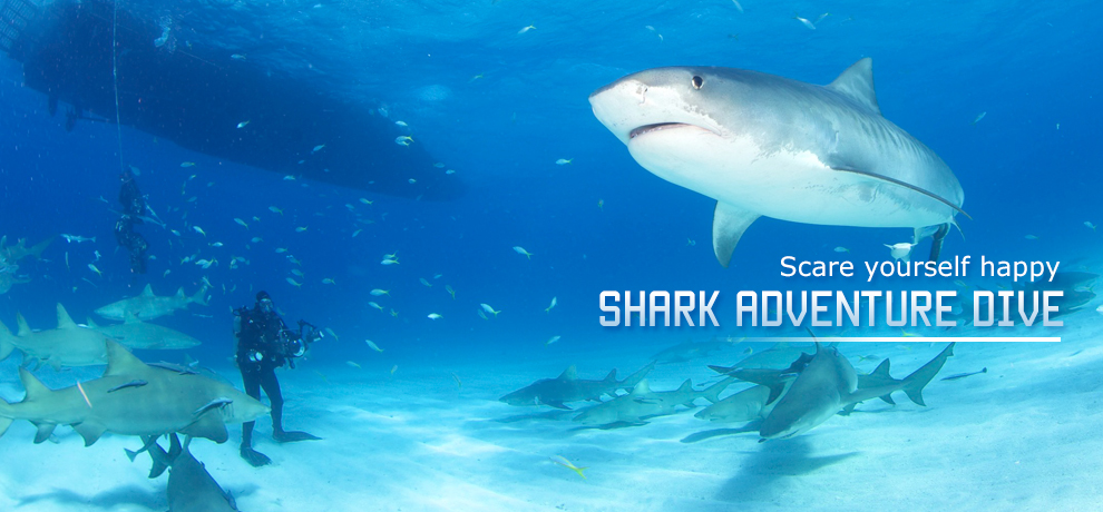 Stuart Cove Shark Adventure Dive