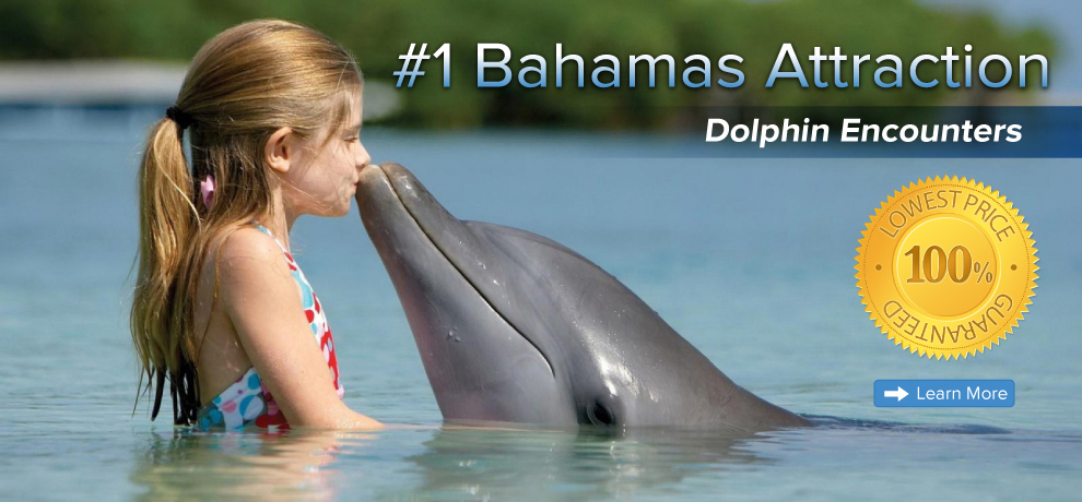 Bahamas Dolphin Close Encounters