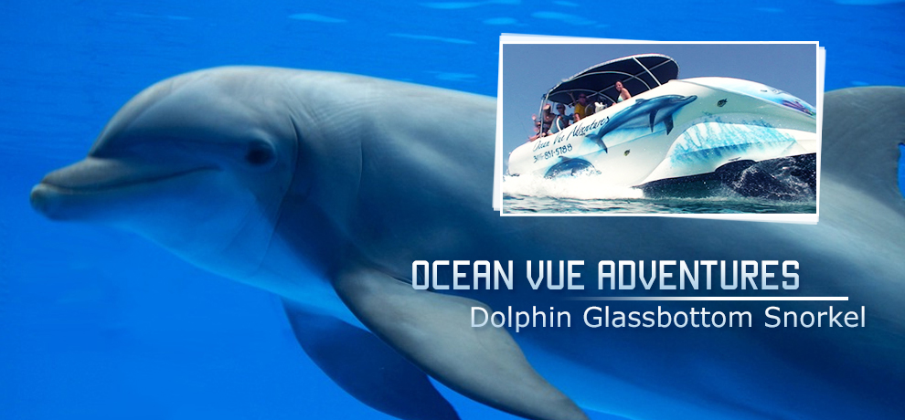 Key West Dolphin Tours