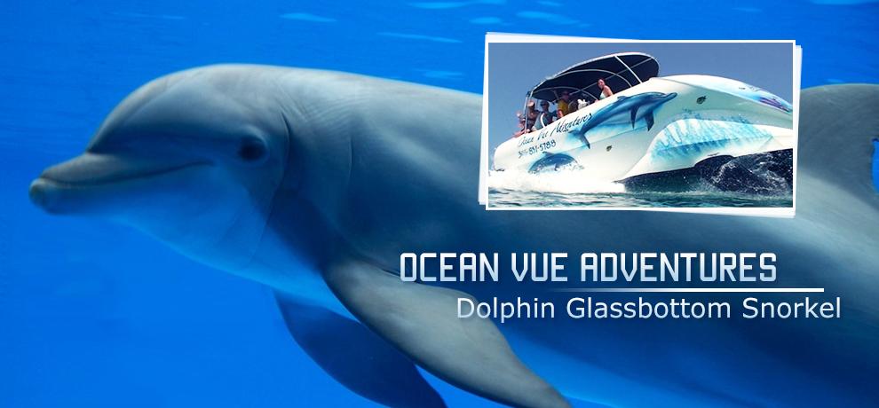 Key West Dolphin Tours