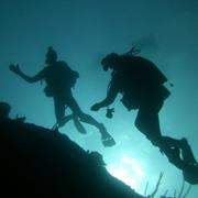 Bahamas Ocean Wall & Reef Dive