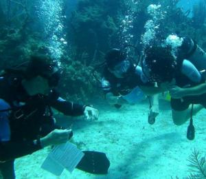 Nassau PADI Scuba Diver Course