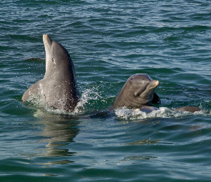 Dolphin Watch & Snorkel Combo
