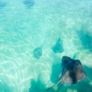 Blue Lagoon Stingray Encounter