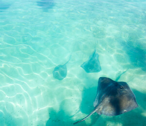 Blue Lagoon Stingray Encounter
