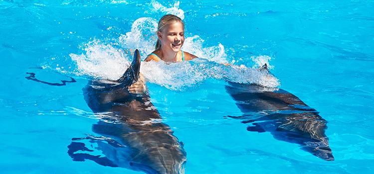 Dolphin Royal Swim In Tulum Akumal
