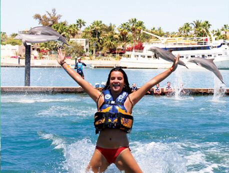 Dolphin Royal Swim VIP Plus