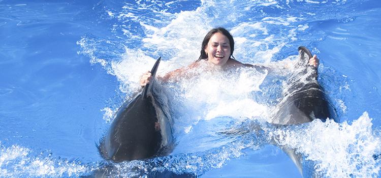 Dolphin Royal Swim VIP Plus image 4