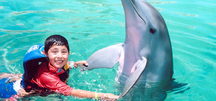 Dolphin Encounter image 2