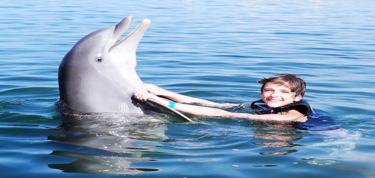 Dolphin Lovers' Swim image 3