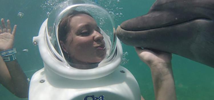 Dolphin Trek image 2