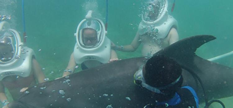 Dolphin Trek image 3