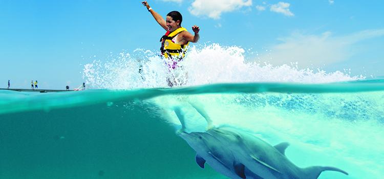 Dolphin Royal Swim image 1