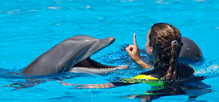 Dolphin Swim Adventure image 4