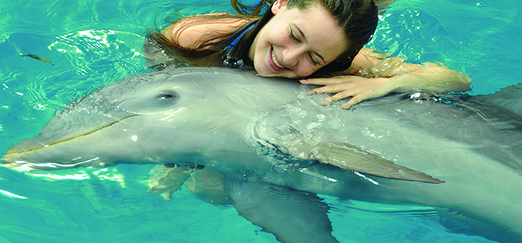 Dolphin Encounter image 1