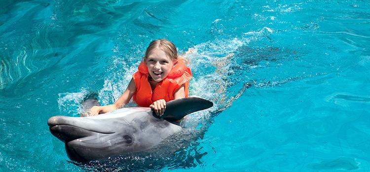 Dolphin Swim Adventure image 4