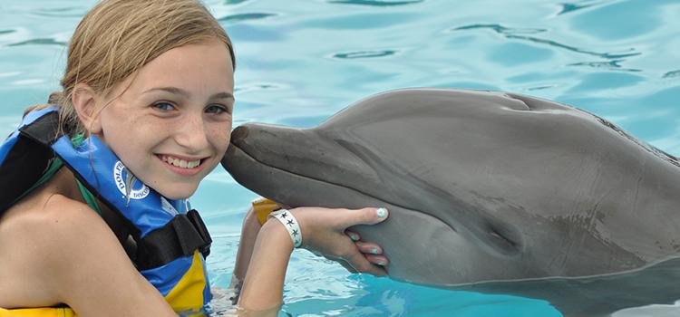 Dolphin Royal Swim image 2