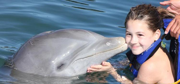 Dolphin Encounter image 3