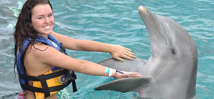 Dolphin Encounter image 4