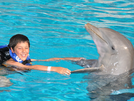 Six Flags - Dolphin Encounter