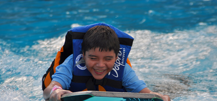 Dolphin Swim image 2