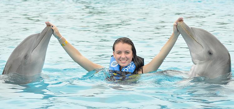 Dolphin Swim image 4