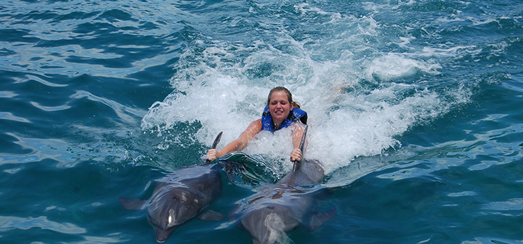 Dolphin Royal Swim image 1