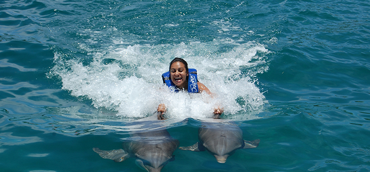 Dolphin Royal Swim image 2