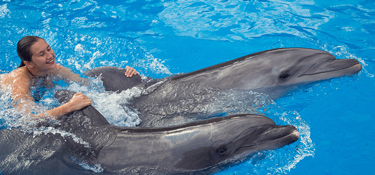 Dolphin Royal Swim image 4