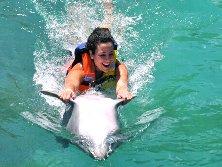 Tortola - Dolphin Swim Adventure