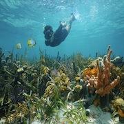 Reef Snorkel & Beach Break