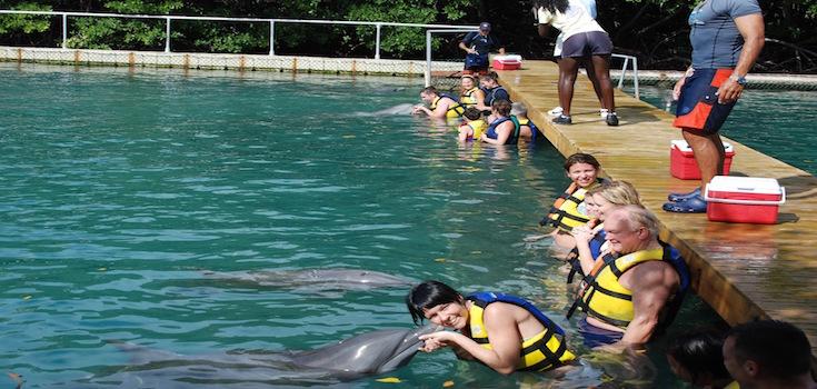 Dolphin Discovery Swim + Ferry St. John  image 1