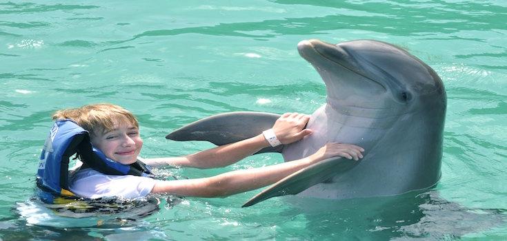 Dolphin Discovery Swim + Ferry St. John  image 3