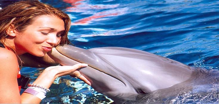 Dolphin Swim Adventure + Ferry St. John  image 2