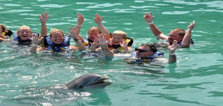 Dolphin Swim Adventure + Ferry St. John  image 3
