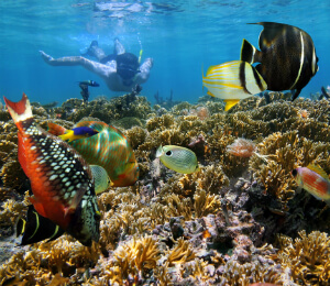 Freeport Snorkel and Dolphin Experience