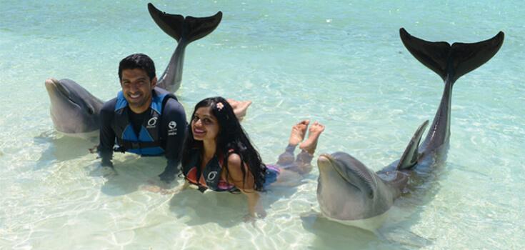 Blue Lagoon Royal Dolphin Swim image 2