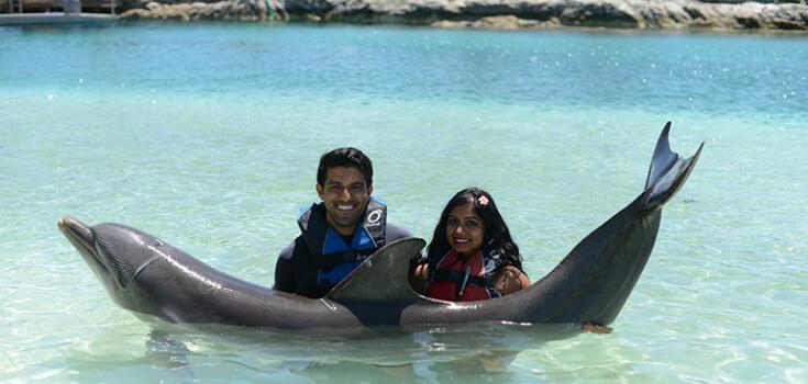 Blue Lagoon Royal Dolphin Swim image 4