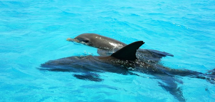 Wild Dolphin Encounter and Snorkel