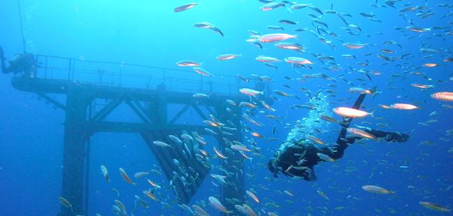 Advanced Scuba Diving Certification