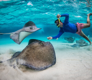 Breakfast and Snorkel Cruise to Stingray City