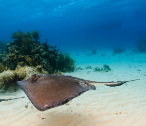 Stingray City Snorkeling With Lunch