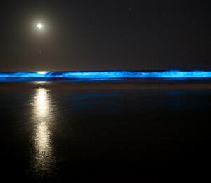 Grand Cayman Bioluminous Tour